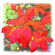 Carpet Mixed Media Posters - Azalea Leaves Poster by Terry LeBlanc