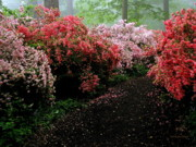 Land Scape Prints - Azalea Pathway Print by Deborah  Crew-Johnson