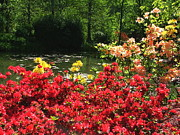 Eure Metal Prints - Azaleas along the pond1 Metal Print by Danny Cieloha