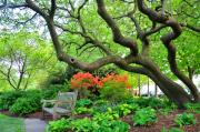 Fairmount Park Prints - Azaleas Bench Print by Andrew Dinh