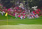 Tournament Photo Prints - Azaleas in bloom Print by David Bearden