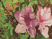 Close Up Floral Pastels Posters - Azaleas Poster by Jim Barber Hove