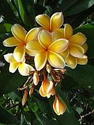 Hearty Prints - Aztec Gold Plumeria Print by Mary Deal