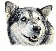 Husky Drawings Metal Prints - Aztec Metal Print by Joanne Stevens