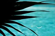 Michelle Wiarda - Azure Palm