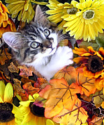 Kitteh Prints - Baby Animal Playing in a Flower Basket - Kitty Cat Kitten with Large Eyes Looking Up with Paw Up Print by Chantal PhotoPix