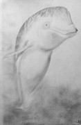 Animals Drawings - Baby Beluga by Kylani Arrington