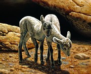 Bighorn Prints - Baby Bighorns Print by Crista Forest