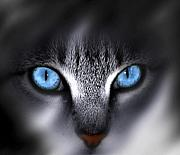 Cat Face Prints - Baby Blues Print by Cecil Fuselier