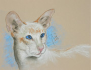 Red Point Siamese Posters - Baby Blues Poster by Cori Solomon