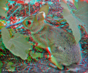 Grape Leaves Posters - Baby Bunny - Use Red-Cyan 3D glasses Poster by Brian Wallace
