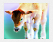 Steer Mixed Media Framed Prints - Baby Calf 2 Framed Print by John Breen