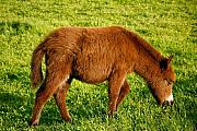 Baby Donkey Posters - Baby donkey Poster by Gaspar Avila