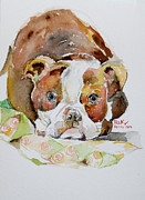Pitbull Originals - Baby Faris by Becky Kim