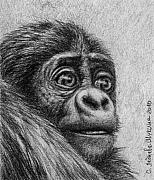 Gorilla Drawings - Baby Gorilla by Svetlana Ledneva-Schukina