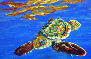 Baby Sea Turtle Paintings - Baby Hawkbill turtle by Jennifer Belote