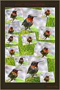 Baby Bird Mixed Media Framed Prints - Baby Hummingbird Collage Framed Print by Debra     Vatalaro