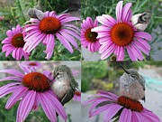 Nectarivore Art - Baby Hummingbird Collage by Stephanie Wenzl