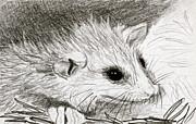 Baby Opossum Print by Linda S Watson