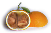 Digital Images Posters - Baby Orange Poster by MiMi  Photography