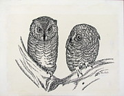 Owls Drawings - Baby owls sitting by Carol Nistle