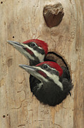 Woodpecker Art - Baby Pileated Woodpeckers Peer by George Grall