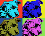 Dog Art Painting Framed Prints - Baby Pit Face Framed Print by Dean Russo