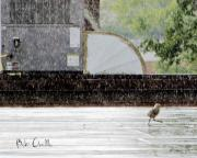 Funny Prints - Baby Seagull Running in the rain Print by Bob Orsillo