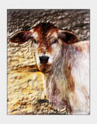 Steer Mixed Media Framed Prints - Baby Steer 1 Framed Print by John Breen