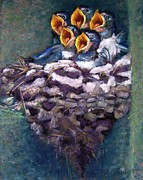 Nest Pastels Posters - Baby Swallows Poster by Barbara Richert
