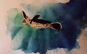 Baby Sea Turtle Paintings - Baby Turtle 6 by Jennifer Belote