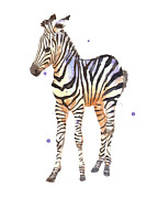 African Art Painting Posters - Baby Zebra Nursery animal art Poster by Alison Fennell