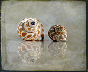 Babylon Metal Prints - Babylon Shells Metal Print by Cindi Ressler