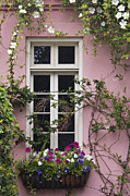 Petunia Photos - Back Alley Window Box - D001793 by Daniel Dempster