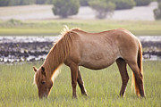 Mustang Photos - Back-lit Wild Horse by Bob Decker