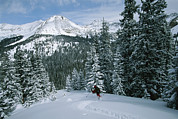 Winter Views Prints - Backcountry Skiing Into An Evergreen Print by Tim Laman