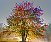 Backlit Leaf Prints - Backlit Maple in Autumns Light Print by Rob Travis