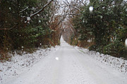 Winter Road Scenes Photo Posters - Backroad Snow Poster by Lisa Moore