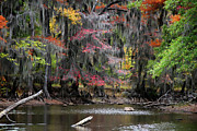 Big Cypress Bayou Photos - Backwater Autumn by Lana Trussell