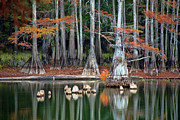 Big Cypress Bayou Photos - Backwaters by Lana Trussell