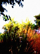Bdmeredith Prints - Backyard Hues Print by Brian D Meredith