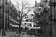 Bronx Prints - Backyards in the Bronx Print by Bob Combs and Photo Researchers