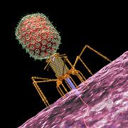 Virion Art - Bacteriophage T4 Injecting by Russell Kightley