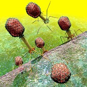 Virology Digital Art Prints - Bacteriophage T4 virus group 2 Print by Russell Kightley