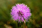Lensbaby Macro Posters - Bad Hair Day Poster by Scott Pellegrin