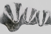 Badgers Drawings - Badgers by Lucy D