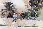 Orchid Paintings - Bahama Paradise 1885 by Stefan Kuhn