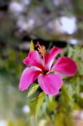 Bahamian Flower Print by Deborah  Crew-Johnson