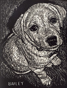 Puppy Prints - Bailey the Puppy Print by Robert Goudreau