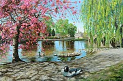 Pink Blossom Trees Prints - Bakewell Bridge - Derbyshire Print by Trevor Neal
